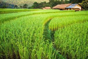 grüne Felder im Zentraltal