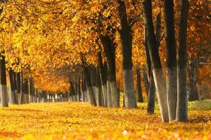 Herbstpark. Backend.