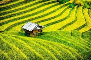 Reisfelder auf Terrassen von Mu Cang Chai, Vietnam