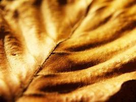herbstlaub, gebuchtblatt