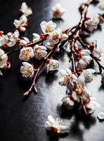 Zweig der blühenden Mandelblume auf einem schwarzen Hintergrund