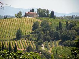 italienischer Olivenanbau
