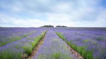 Lavendelfarm Felder