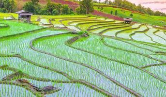 Getreidefeld und Bauernhof