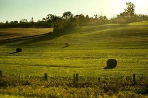 Bauernhof Feld foto