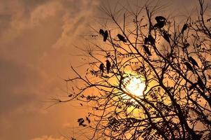 Sonnenuntergang und Vögel am Baum foto
