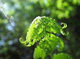 grün, wie ich dich liebe, grün foto