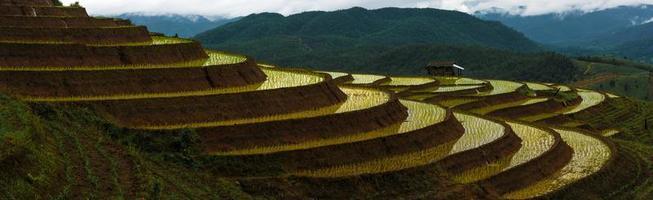 Panorama von Reisfeldern auf Terrassen foto