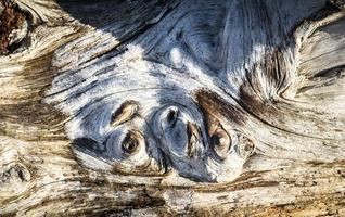 frostbedecktes Treibholz