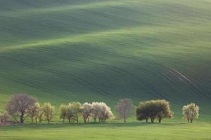 narurale Landschaft von Grün- und Blütenbäumen mit Blick auf das Rollen