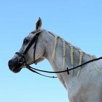 Pferd auf blauem Himmel foto