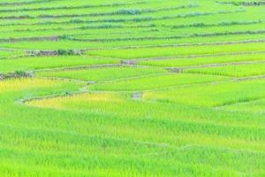Landwirtschaft Bauernhof Reis