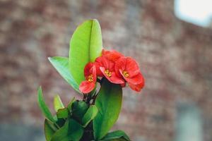 rote Blüten mit grünen Blättern foto