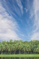 Kokospalmen mit Himmelhintergrund.