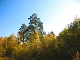 Herbstbäume und blauer Himmel
