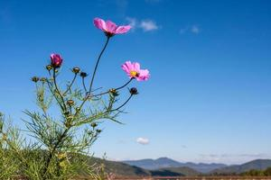 rosa Kosmos mit blauem Himmel foto