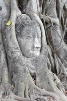 Buddha-Statue von Wurzeln des spirituellen Baumes verschlungen foto