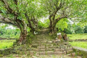 Baumtunnel zum Wat Phu Heiligtum