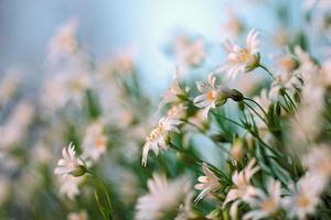 Frühlingsblumen auf blauem Himmel Hintergrund