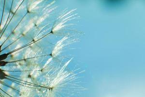 Löwenzahn und Samen im blauen Himmel