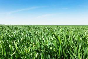 Feld von grünem Gras und Himmel