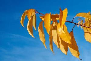bunte Herbstblätter gegen den Himmel