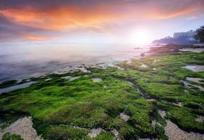 grünes Moos des hellen Sonnenuntergangs des Seestücks auf dem Stein am Meer