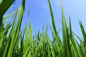 grünes Feld und blauer Himmel mit hellen Wolken