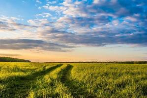 Grasfläche und dramatischer Himmel bei Sonnenuntergang