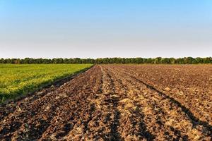 grünes und gelbes Bauernfeld über blauem Himmel