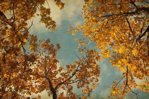 Herbstlaub auf dem Himmelhintergrund.