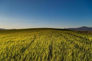 grüne Feldansicht im Freien mit blauem Himmel und Wolken