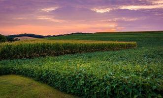 Sonnenuntergang Himmel über Bauernhof Feld in ländlichen York County, Pennsylvania.
