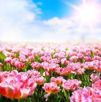 abstrakter sonniger schöner Frühlingshintergrund foto