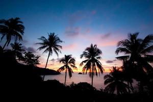 Silhouette Palmen foto