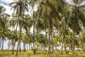 Palmen träumen foto