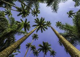 Palmen 2 foto