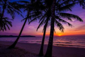 Palmenschattenbild bei Sonnenuntergang foto
