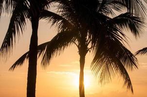 Palmen am Morgen foto