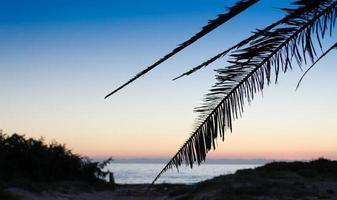 Palmenschattenbild am Ufer in der Abenddämmerung foto