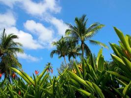 üppiges Grün und tropisches Wetter foto