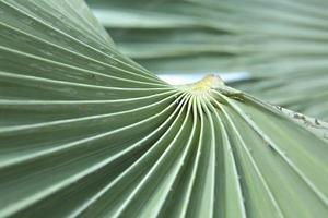 Palmblatt foto