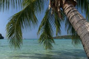 Palme am Strand in Thailand foto