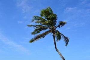 Palmenbecher foto