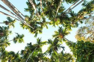 niedrige Winkelansicht Gruppe von Palmen foto