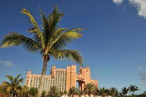 Palme vor Atlantis auf Paradiesinsel in Bahamas