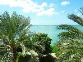 Palmen vor dem Meer in Dschibuti foto