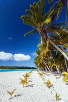 Kokospalmen auf der Insel foto