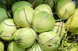 süßer Kokosnussbaum foto