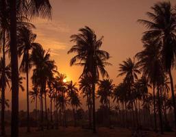getöntes Bild eines schönen Sonnenuntergangs